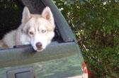 Hond in de kofferbak in Canada