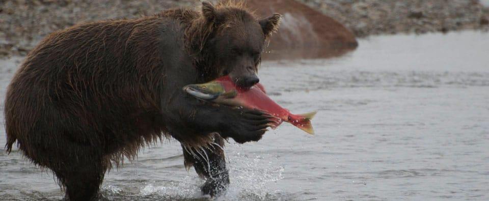 Volop avontuur: Alaska vakantie