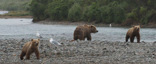 Alaska. The Last Frontier