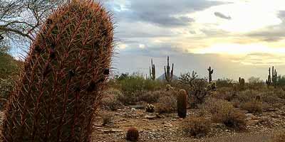 Tucson en omgeving. Ontdek Zuid-Arizona