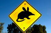Australie kwis: leuke vragen over Down Under. Wat weet jij over het kleinste continent op aarde?