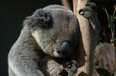 The Big Six Down Under. De meest bijzondere dieren van Australie