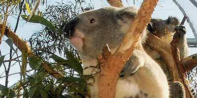 Australië vakantie