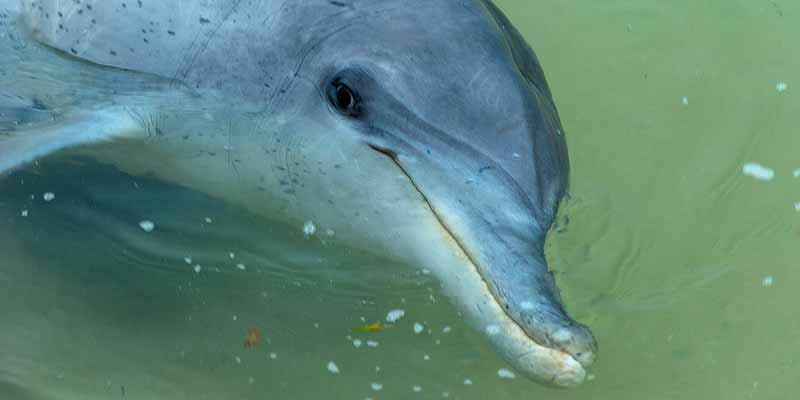 Bij Monkey Mia aan de Australische westkust komen de dolfijnen naar het strand