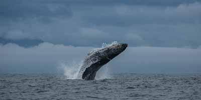 Canada wilde dieren spotten: The Big 5. De grootste en gevaarlijkste dieren van Canada