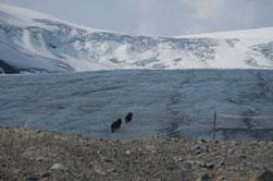 Athabasca Glacier onderdeel van de Columbia Icefields