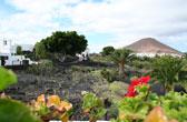 Cactustuin op Lanzarote, Canarische Eilanden