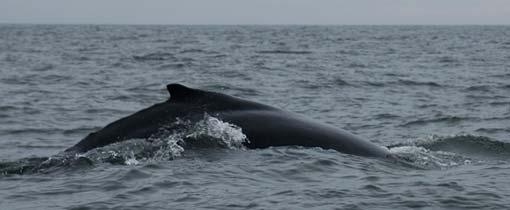 Walvis spotten Tenerife. Een onvergetelijke ervaring