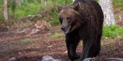 Big 5 wilde dieren. Wat zijn de grootste dieren van Finland?