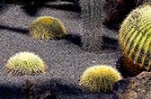 Jardín de Cactus de Lanzarote. De stekelige tuin van Cesar Manrique
