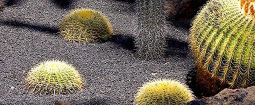 Jardin de Cactus. De stekelige tuin van Cesar Manrique