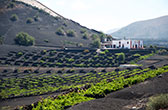 La Geria wijnstreek. De unieke lavawijn van Lanzarote