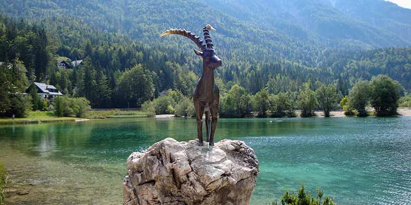 De steenbok. Het symbool van de Julische Alpen