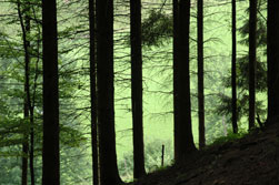 plaatsen zwarte woud